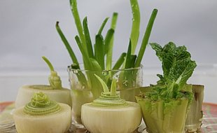 Leeks-Fennel-and-Green-Onions