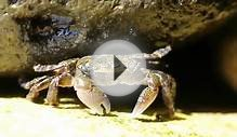 Different Types of Crab (with Pictures)